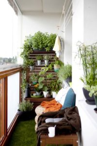 piante per balcone perfetto