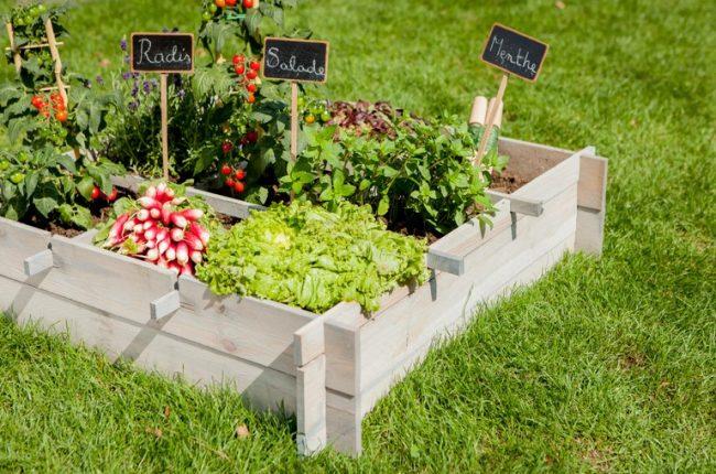 giardinaggio-urbano-tendenze-di-condivisione-ed-eticita